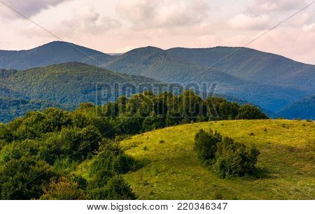 beautiful countryside with forested rolling hills. lovely Landscape of Carpathian mountains in early autumn season