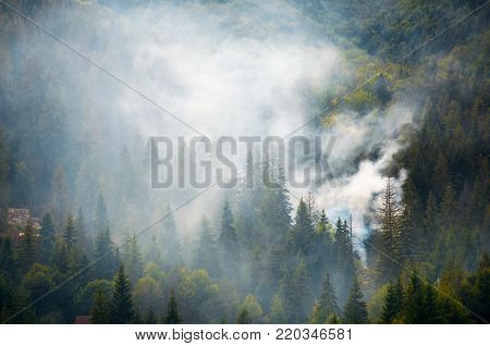 Spruce Forest On Hillside In Smoke
