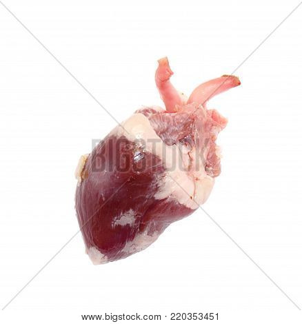 Raw fresh meat turkey offals - one heart isolated on white background