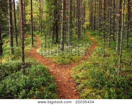 Crossroads In The Forest