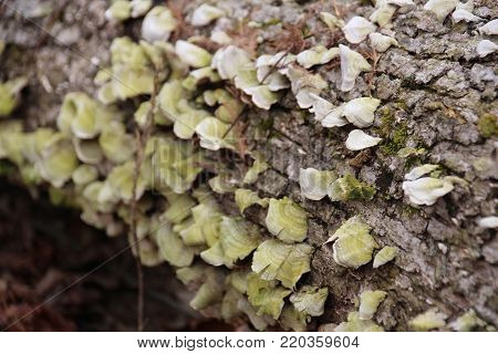 Remarkable greenish Fungi and moss growing on decomposing tree trunk laying on grown at Deam Lake in Indiana