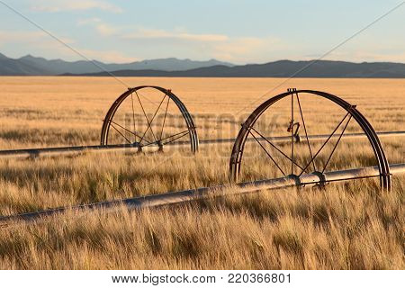 Field Irrigation System in Montana with Rocky Mountains