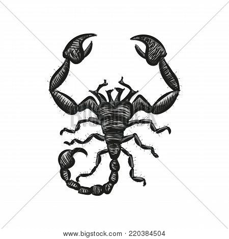 Scorpion vector. Astrological icon. Spider. The symbol of November