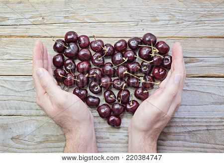 Heart of fresh and ripe cherries in cupped male hands on wooden background Health care concept Valentine's and Women's day