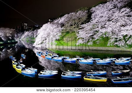 beauty Sakura night scene in the Chidorigafuchi