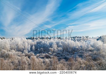 Frosty Trees in the Forest under Blue Sky with Trail of the Plane
