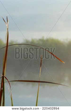 A fragile spider web covered in dew on an early morning in the Everglades National Park.