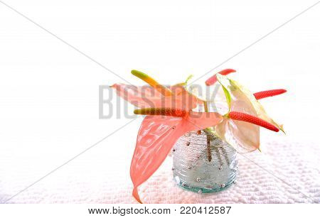 bouquet of anthurium flowers in a glass vase