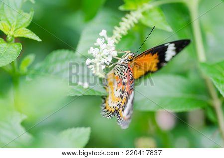 Beautiful butterfly is pollinating on flowers in spring day