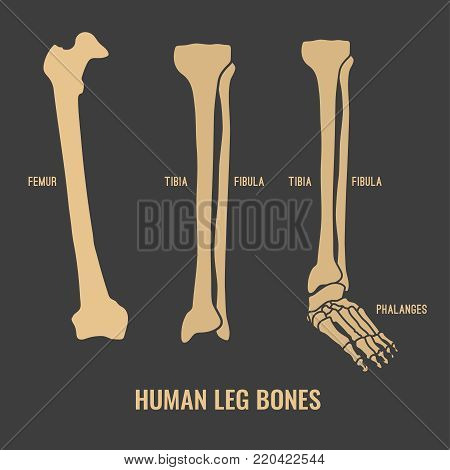 Human Leg Bones Icons. Chest Image In A Flat Style. Vector Illustration In Beige Colour Isolated On