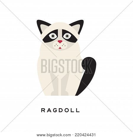 Cute portrait of ragdoll cat isolated on white. Cartoon character of purebred pet. Large and muscular long-haired animal with black markings on ears, tail and around eyes. Flat vector illustration.