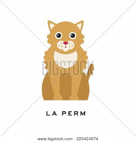 Portrait of la perm cat. Cute feline with long curly red fur coat and shiny eyes. Cartoon character of purebred domestic animal. Isolated flat vector illustration. Design for pet shop or vet clinic. poster