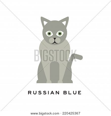 Russian blue cat. Adorable short-haired feline with gray coat, intelligent muzzle and big green eyes. Cartoon pet character. Purebred domestic animal in flat style. Vector design for logo of zoo store poster