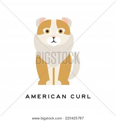 Icon of american curl cat. Purebred pet with curled ears, brown fur and white ruff around neck. Cartoon character of domestic animal. Isolated flat vector illustration for vet clinic or zoo shop logo.