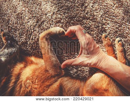 photo of a person and a dog making a heart shape with the hand and paw in natural sunlight with rays of sunshine toned with a retro vintage instagram filter