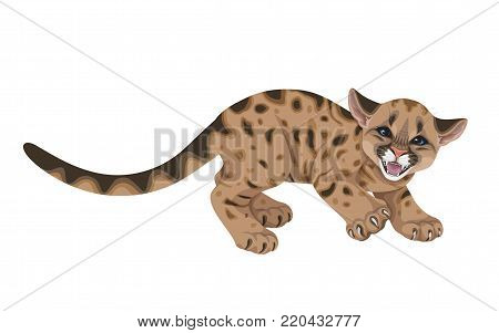 Little spotted angry puma  with long tail.Young hissing American mountain lion  isolated on white. Cute  cougar cub vector flat illustration.