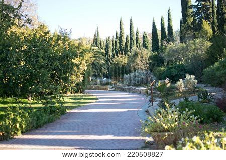 MALAGA, SPAIN - DECEMBER 19, 2017: Detail of sunlit path with junipers in Jardin de la Concepcion on December 19, 2017 in Malaga, Spain