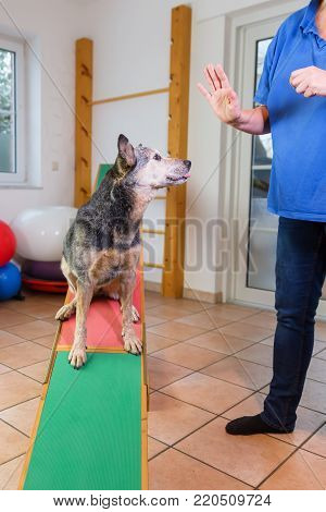 Australian Cattledog In A Hydrotherapy Station