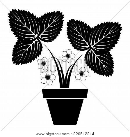 vector flowering strawberry plant in pot isolated on white background