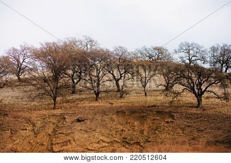 Landscape Image of an Arid Tree Lined Hill