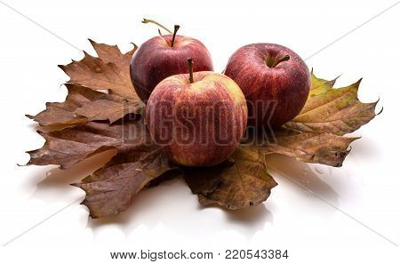 Three whole Gala apples on maple leaves isolated on white background autumn composition