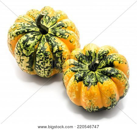 Two whole colorful pumpkin (spotty green yellow) isolated on white background