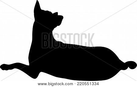 Silhouette of dog lie on the floor looking far away.