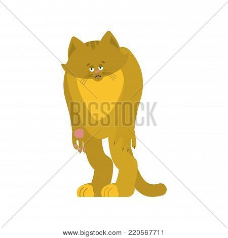 Cat sad. Pet sorrowful emotions. kitty dull. Vector illustration