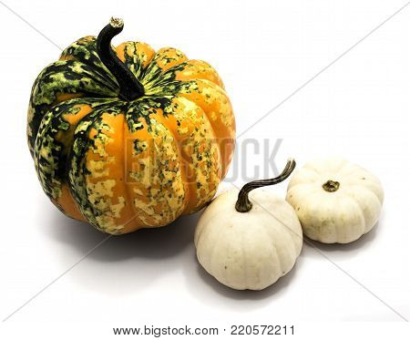 Three whole colorful pumpkins (two spotty green yellow, one white) isolated on white background