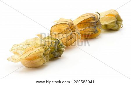 Five physalis in husk isolated on white background