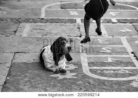 Photo of girl jumping playing popular street outdoor childish sports game hopscotch flowers figures drawn with white paint on pavement walkway slabs dog laying on urban background, horizontal picture