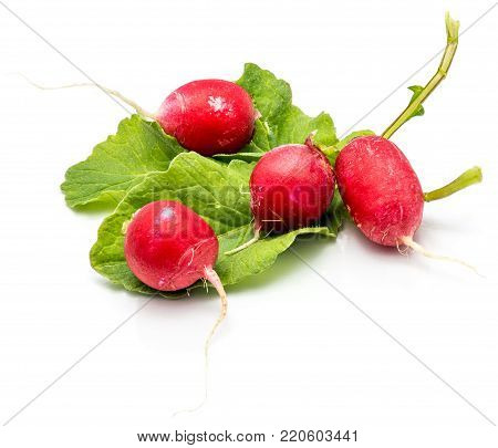 Four bulbs of red radish on fresh green leaf isolated on white background