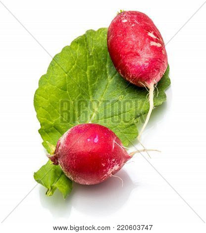 Two bulbs of red radish on fresh green leaf isolated on white background