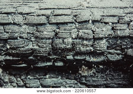 texture of charred wood in the winter in the snow