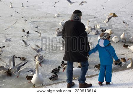 The child with the father watching the swans and ducks on the frozen lake in winter