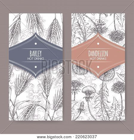 Set of two labels with Barley aka Hordeum vulgare and Dandelion aka Taraxacum officinale sketch. Used as coffee substitute. Hot drinks collection. Great for cafe, bars, tea ads.