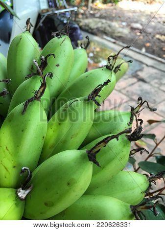 Close-up of green raw banana at house in Mekong Delta, Vietnam.