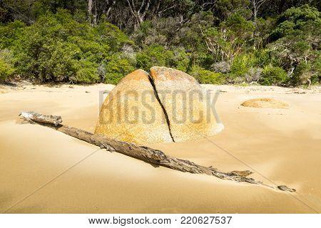 Granite boulder and driftwood in sand on forest coastline