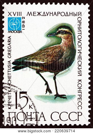 RUSSIA - CIRCA 1982: a stamp printed in the Russia shows sociable lapwing, chettusia gregaria, critically endangered bird, circa 1982