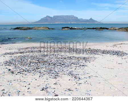 FROM BLOUBERG STRAND, CAPE TOWN, SOUTH AFRICA, WITH SEA SHELLS ON THE BEACH IN THE FORE GROUND AND A VIEW OF TABLE MOUNTAIN IN THE BACK GROUND