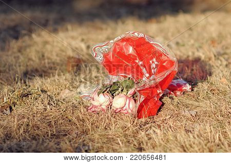 thrown red bouquet of wilted flowers on the dry grass under the summer sun dramatic story of love sunny background wallpaper poster