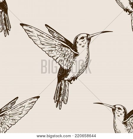 Humming bird animal engraving seamless pattern vector illustration. Brown aged background. Scratch board style imitation. Hand drawn image.