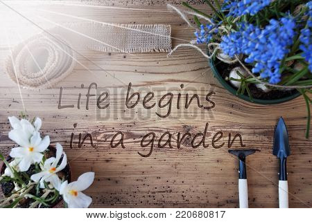 English Quote Life Begins In A Garden. Sunny Spring Flowers Like Grape Hyacinth And Crocus. Gardening Tools Like Rake And Shovel. Hemp Fabric Ribbon. Aged Wooden Background
