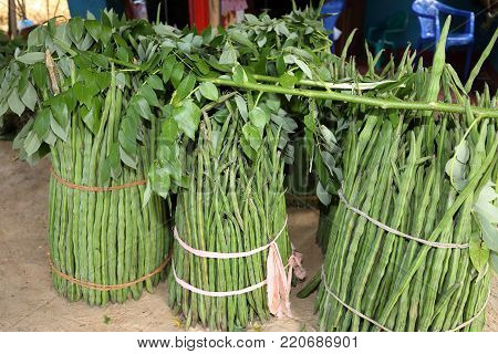 the green and fresh Ladyfinger vegetables and food