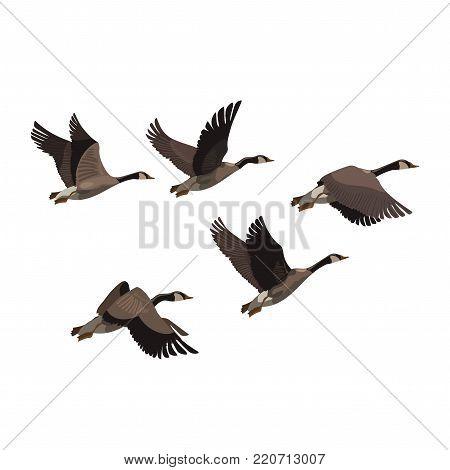 Flock of ducks. A cartoon flock of birds. Vector illustration of flying birds. Drawing for children.