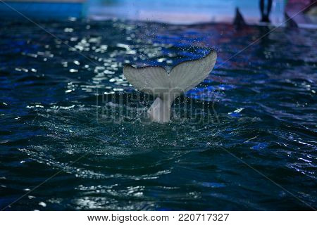 the tail of the Dolphin in the water