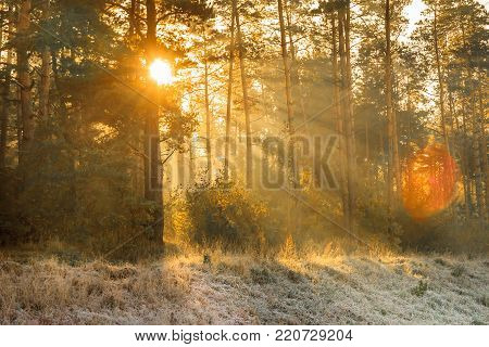 Sun Rays In The Autumn Morning Frosty Landscape In Forest