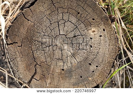 Closeup of old stump top for background. On the stump there are cracks, annual rings, holes from beetles.
