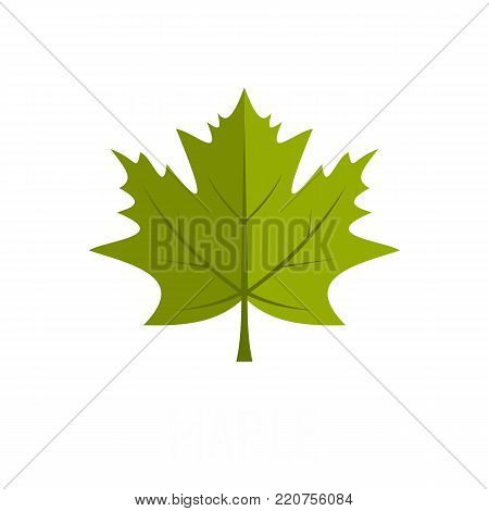 Maple leaf icon. Flat illustration of maple leaf vector icon isolated on white background