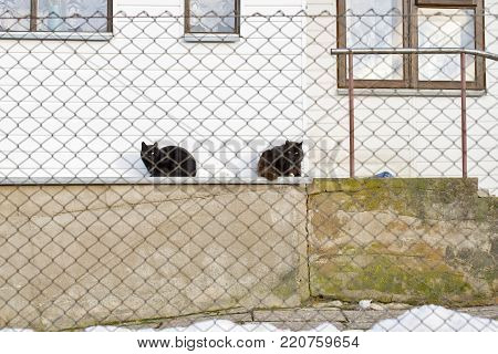 two black cats laying on the sill of white wooden house